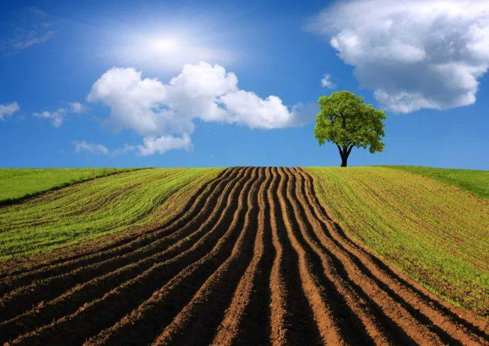Может ли администрация расторгнуть договор аренды земельного участка